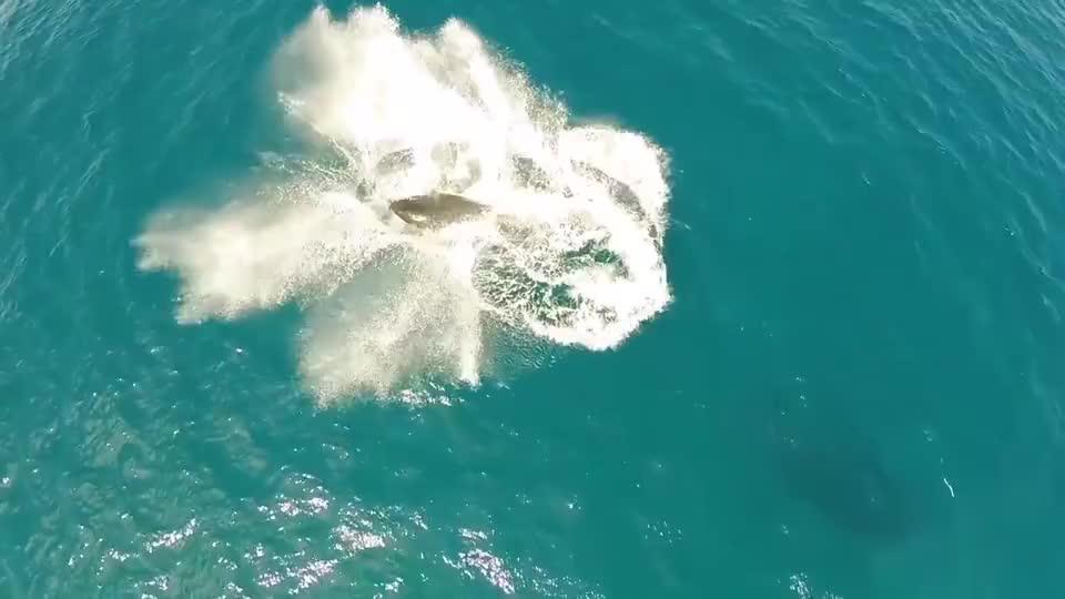 男子海边听到哀鸣声,竟发现一条搁浅的虎鲸,紧张的救援开始了