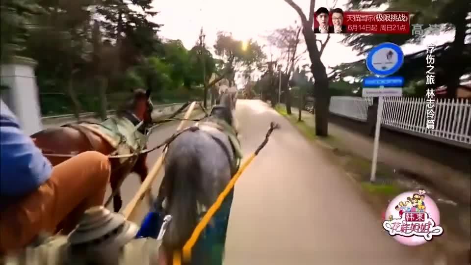 花样姐姐:志玲姐姐讲述自己骑马遭重摔,被马踢到肋骨,断了七根