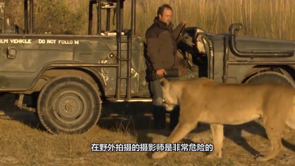 男子野外拍摄时,发现狮子嘴里叼着一黑色物体,放大后倒吸凉气