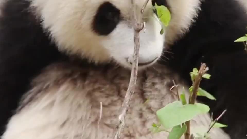 这熊孩子几天没吃饭了?连树叶都不放过,场面笑爆了
