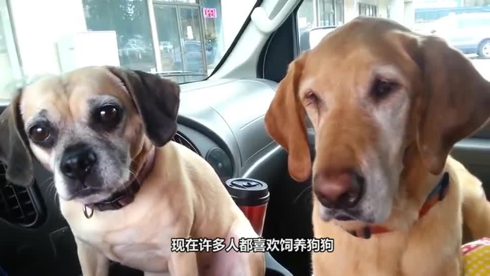 """主人喂狗狗吃点心,一道刀剁下""""狗头"""",哈哈哈请憋住别笑!"""