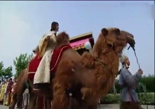 徐海乔骑骆驼,被人说是啥