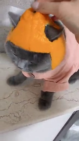 带上这个橘皮,你就不是普通的猫了。
