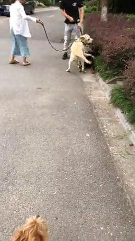 两只狗疯狂撒狗粮,完全虐死另一只单身狗