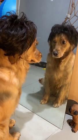 刚换了新发型,狗子好像懵了