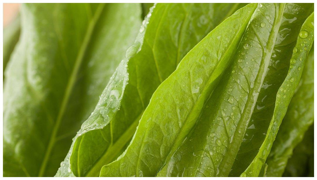 免疫力差的人看过来!常吃此物增强免疫力,降低胆固醇,清燥润肺