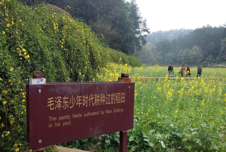 韶山冲毛主席故居前的油菜花海,曾是毛主席耕种过的稻田