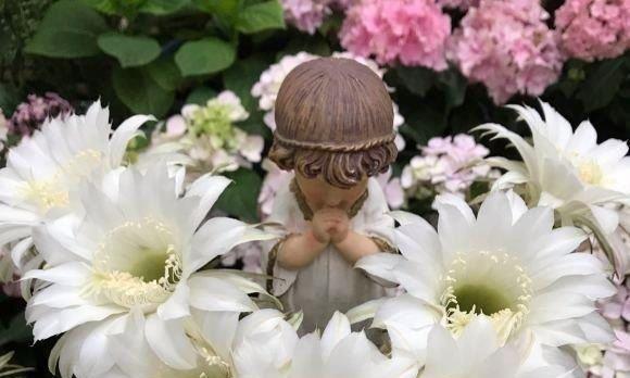 买几个仙人球,丢在花盆里,放在太阳底下,花开不停歇,四季不断