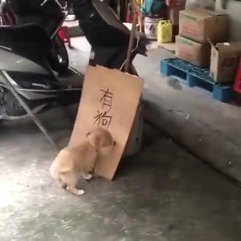当狗子知道自己的下场,他的动作,是不是在抗议着什么