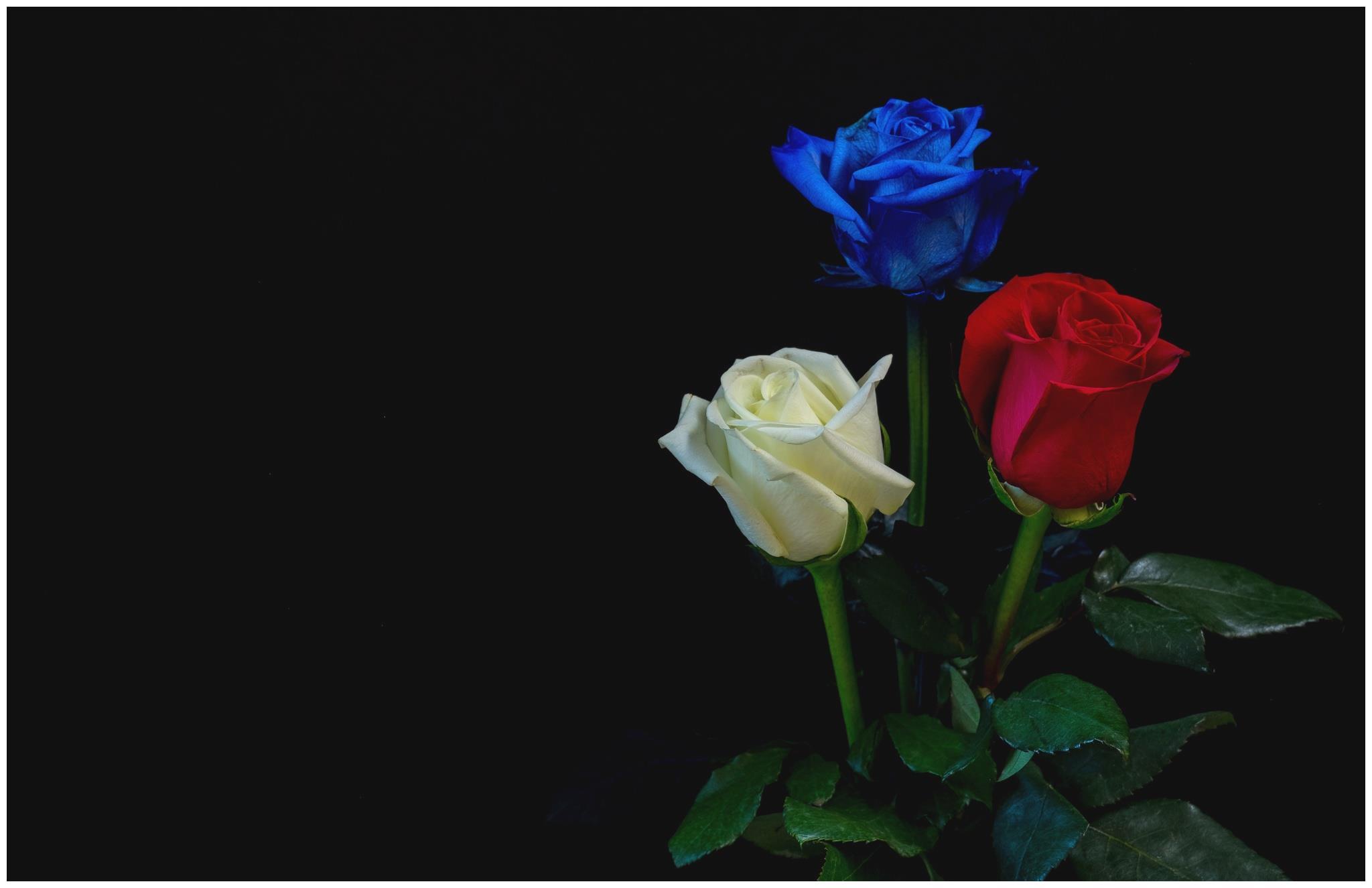6月份期间,灯火阑珊,寻寻觅觅,旧爱轮回的四大星座,相爱白头