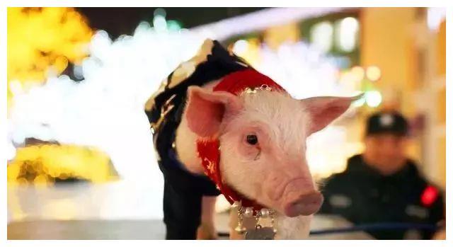 属猪人什么年龄段容易发财?会在3月下旬会遇到什么好事?