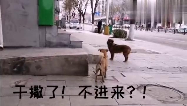 狗子:横啥,你有女朋友吗?单身狗还拦着我不让进
