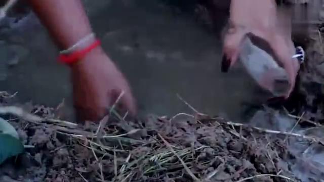 男子在淤泥里设下陷阱,专门用来捕捉黄鳝,抓的都是大货