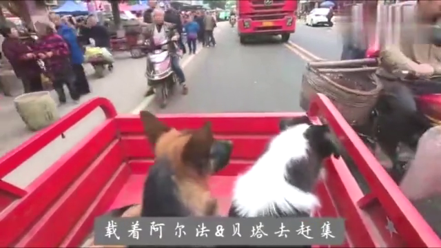 狗狗第一次做三轮车去赶集,一路上想吃掉所有经过的大卡车