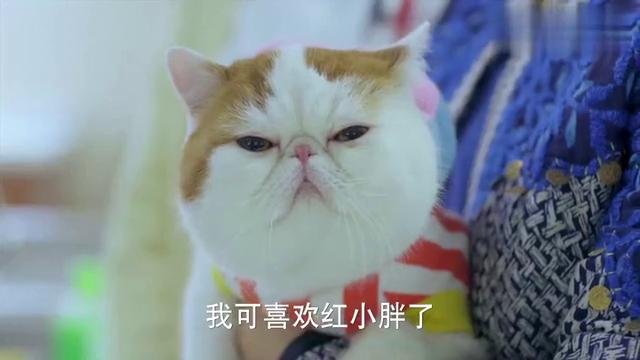 神犬小七:女士的小猫眼光太高,看到丑的同类竟然不理不睬