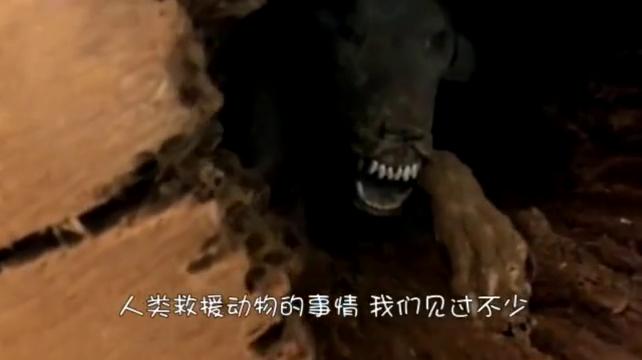 伐木工人发现树干中的狗狗,曾经无数次挣扎,已被困50年了
