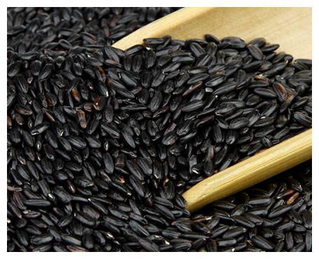 """这米被称为""""长寿米"""",煮粥黏稠好吃,花青素丰富,多吃脸色红润"""