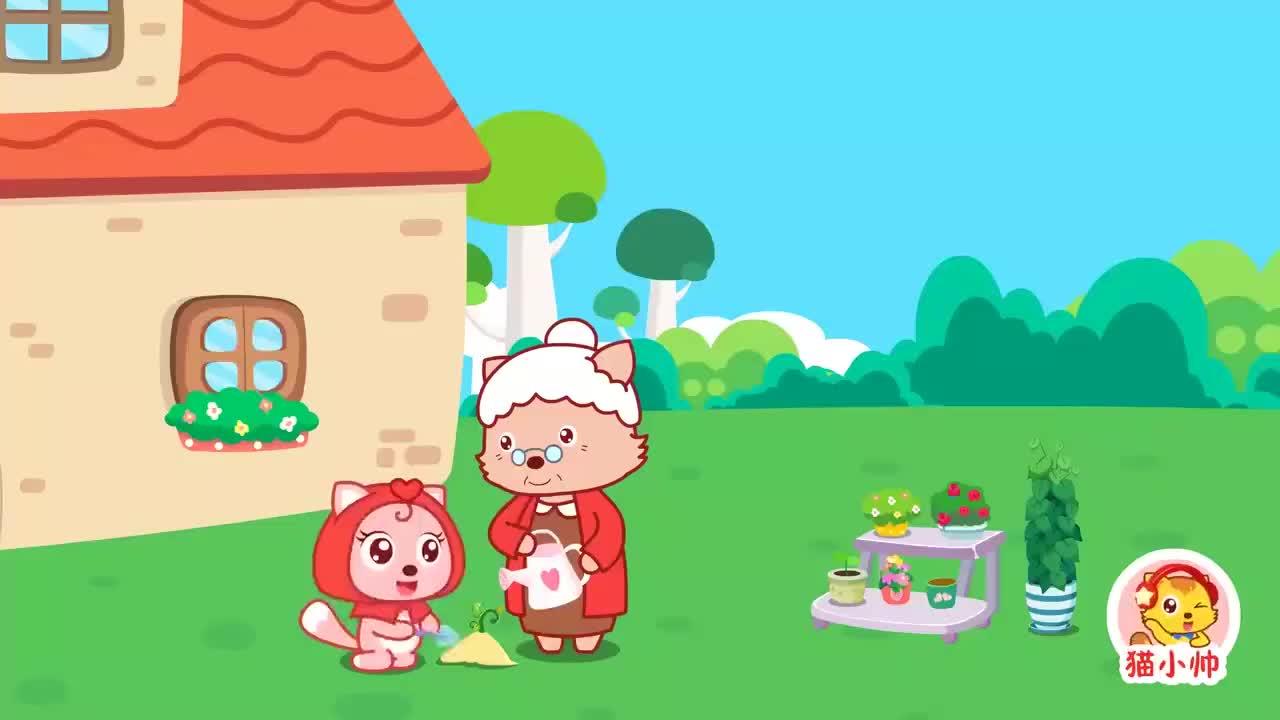 猫小帅故事小红帽去外婆家路上遇见大灰狼它该如何应对