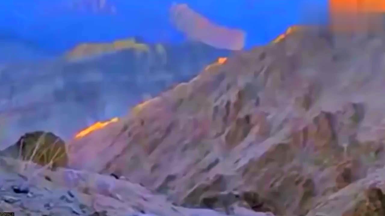 雪山之巅雪豹穿梭在峭壁之上 伺机捕食岩羊,鼠兔等高原动物