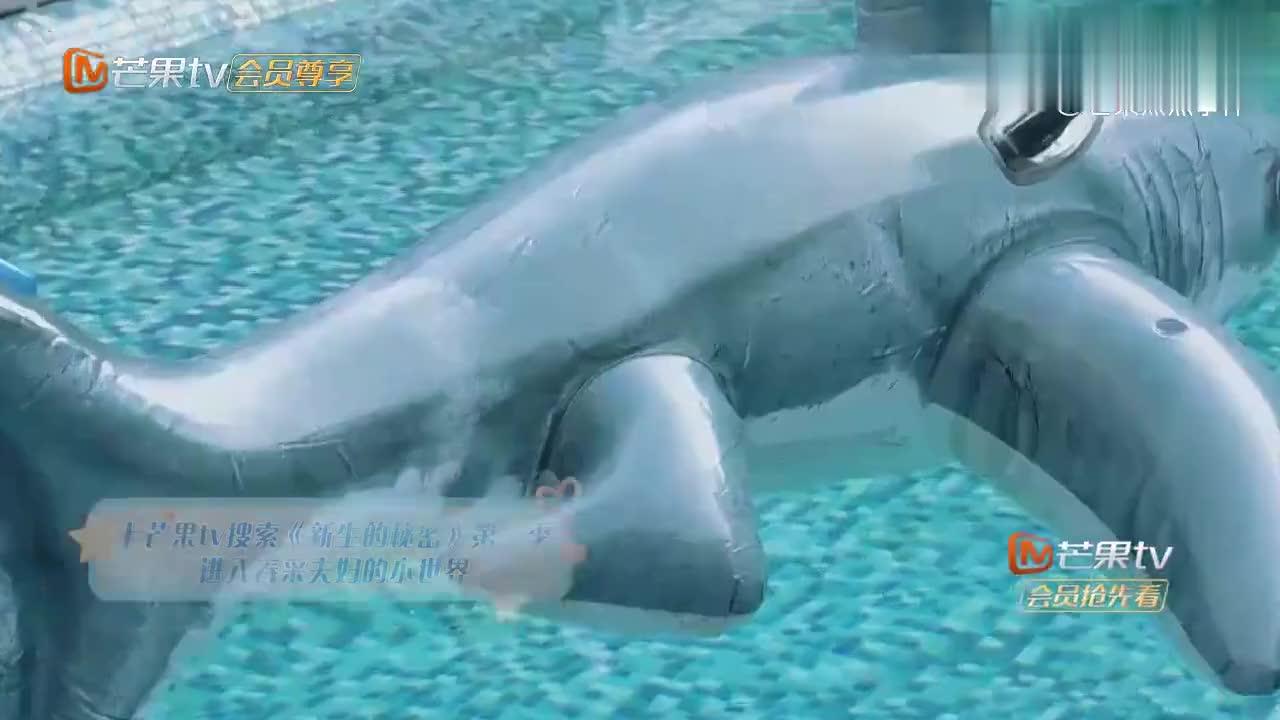应采儿不愧是生二胎的妈妈,小小春在游泳池,她竟要放食人鱼进去