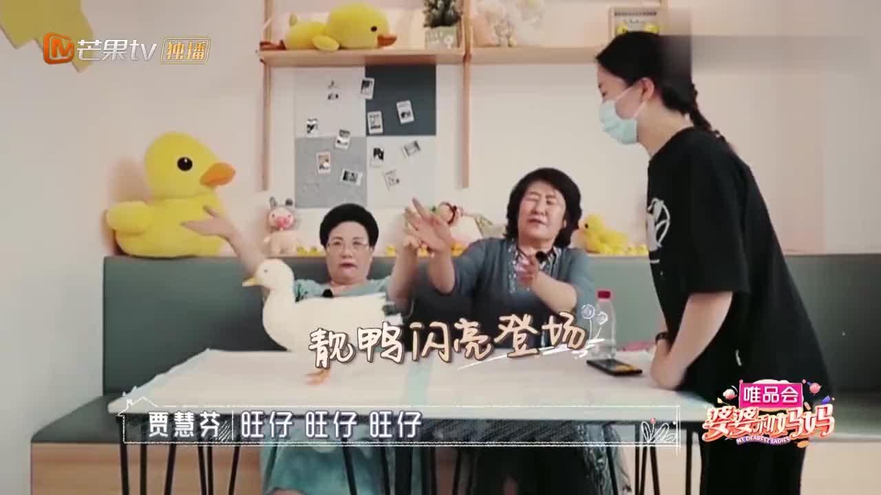 婆婆和妈妈:伊能静钟丽缇婆婆玩鸭子,手法超温柔,想抱孙子了?