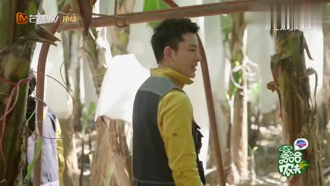 哈哈农夫:贾乃亮王源化身农民工,携手杨超越砍香蕉,笑喷了!