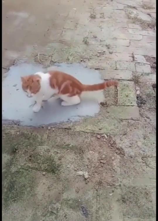猫咪第一次没抓到,杀了一个回马枪再掏一次,看到这一幕我笑了