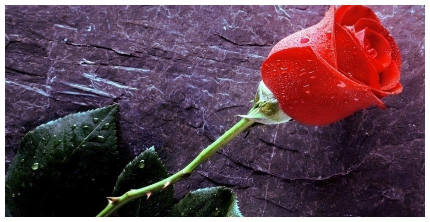 未来7天,红鸾星动,天赐良缘,4大星座佳偶天成,携手坠入爱河