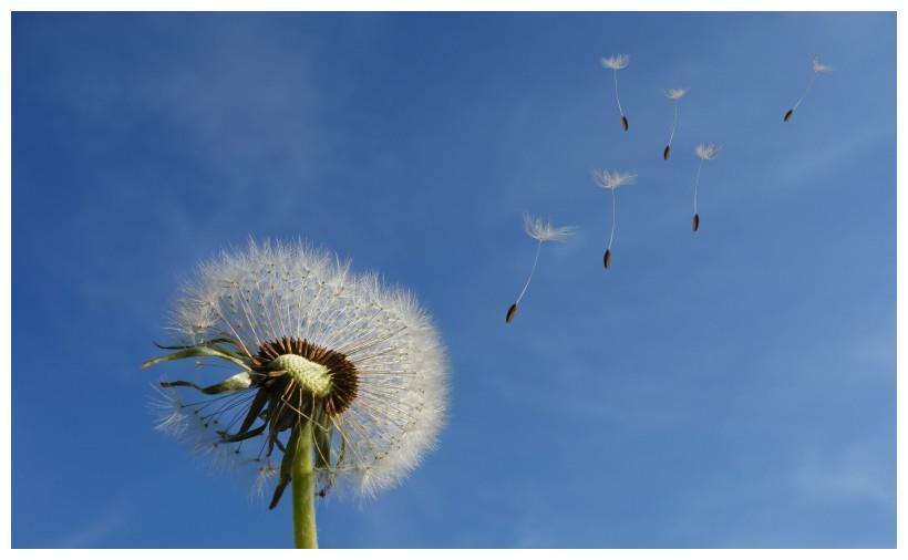 10月大吉大利,桃花朵朵开,爱情开花结果,财运来报到的4大星座