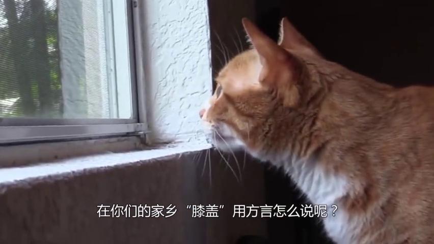 猫咪是固体还是液体?三花猫用实力证明:我们是水做的!