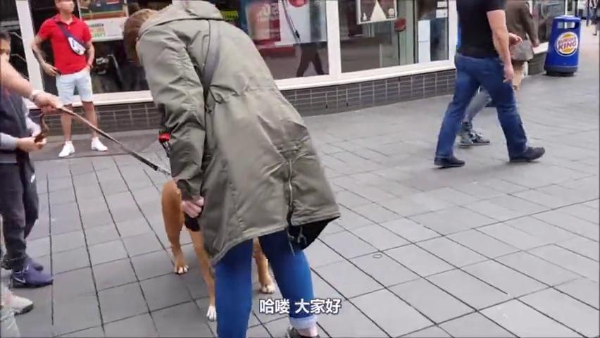 为何比特犬遭禁养?幼犬时攻击力就如猛兽,镜头直击作恶过程!