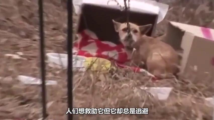 小狗被主人遗弃,狗妈妈历尽艰辛找到,狗宝宝却被冻死在纸箱中!