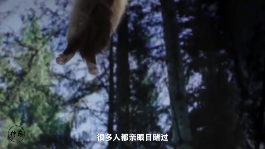 猫咪从高处坠落,为什么总是四脚着地?慢镜头看全明白了