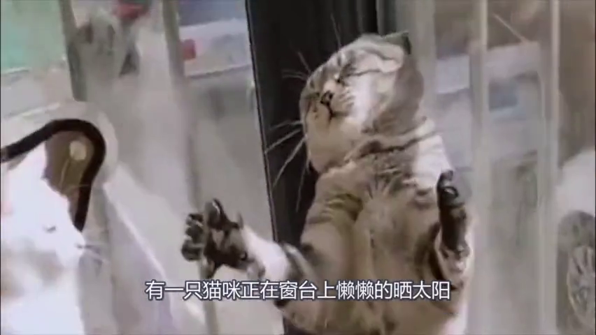 和猫咪打拳闹着玩,不料竟吃了一大波狗粮,情何以堪啊!