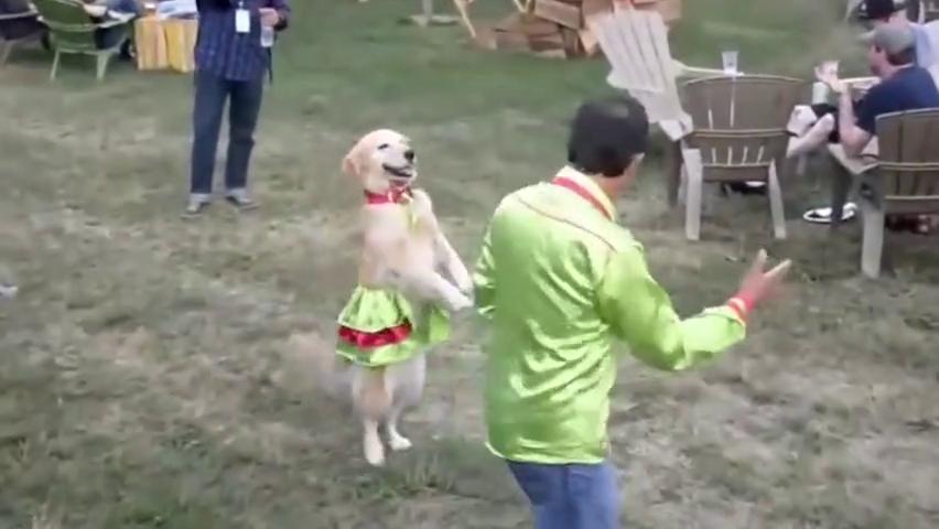 厉害了我的狗狗,这双人舞跳的太销魂了!