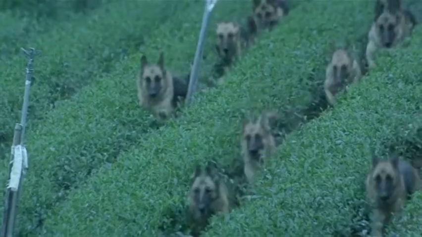 警察办案竟然被一群狗军包围,这样的场面阵容是见所未见的