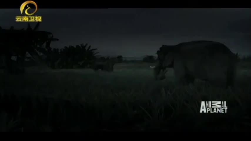 大象为何离开领地,偷吃村民的庄稼,真的是食物短缺吗?