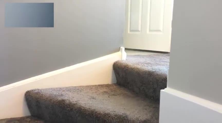 小狗狗刚开始下楼梯很害怕,一定要看到最后,有彩蛋