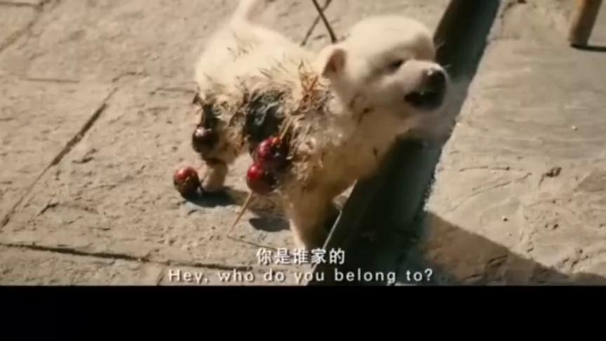 美女路上捡到小流浪狗,不料酒店却不让带,美女撒娇老板马上答应