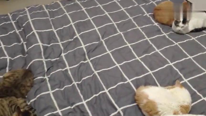 就寝时间到了,猫咪们早早地占据了休息的位置。
