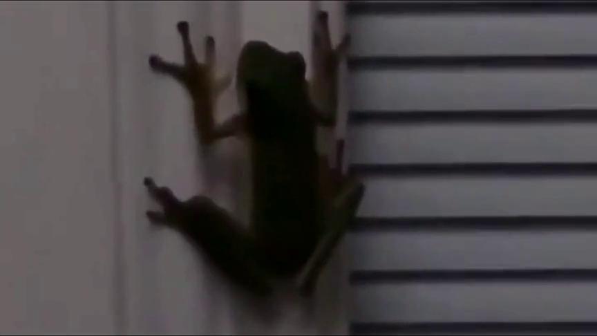 青蛙吞了一只萤火虫