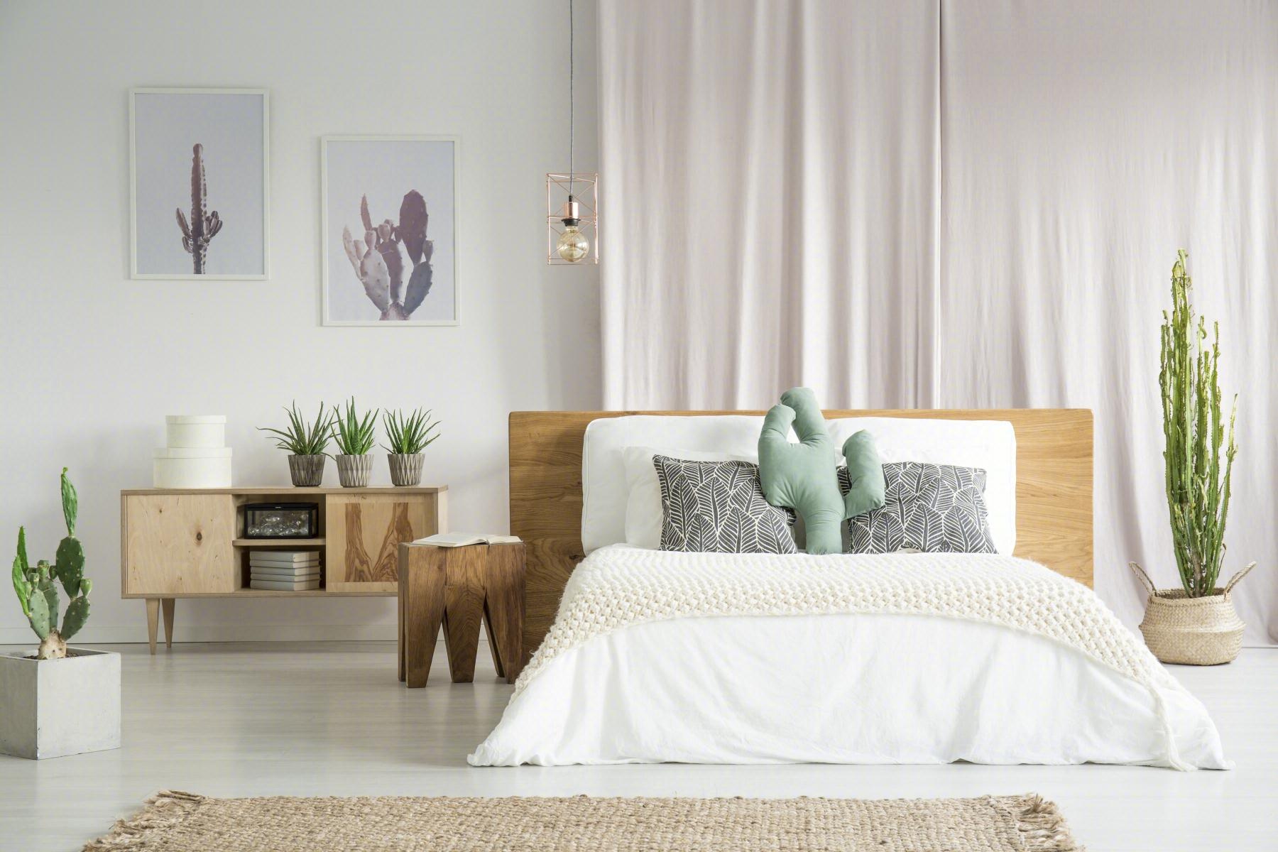 告别家居单调感,盆栽让空间充满活力,可这四类花真不适合卧室