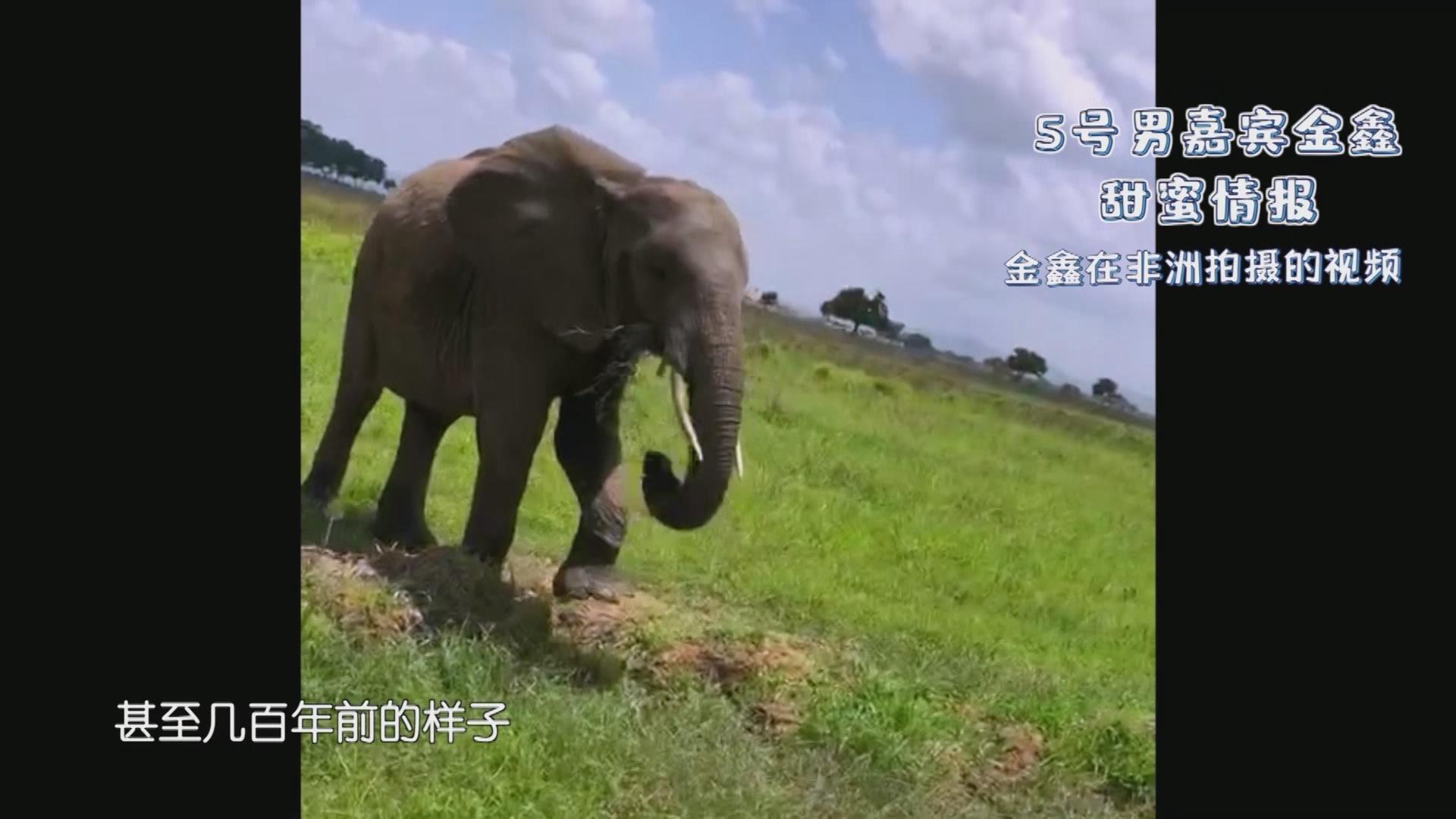 新相亲:最浪漫的事就是带你去非洲大草原看动物迁徙!