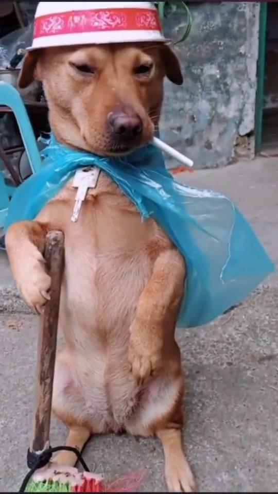 看到这只狗狗,我突然想起了我们上个包工头
