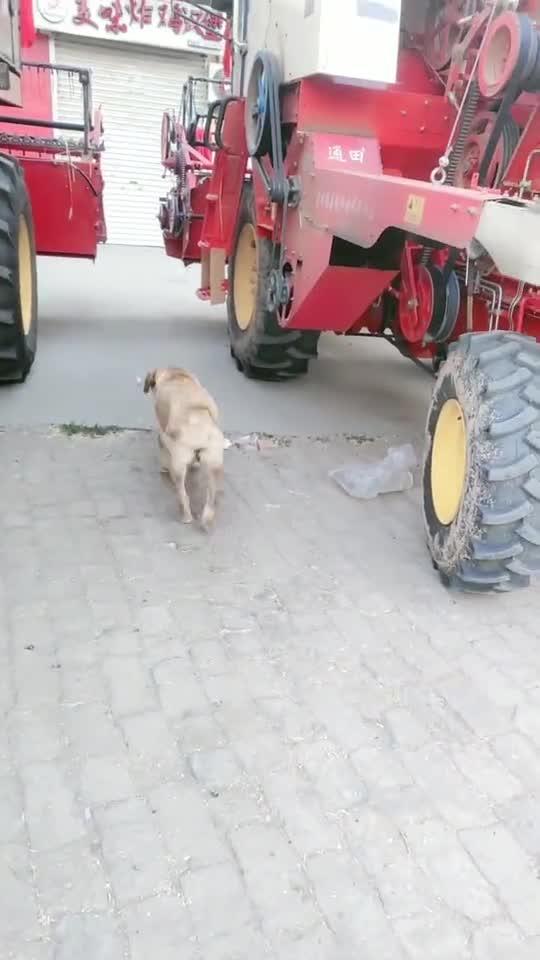 大爷终究是大爷!骑三轮捡废品都不用下车,这样的狗狗我羡慕了!