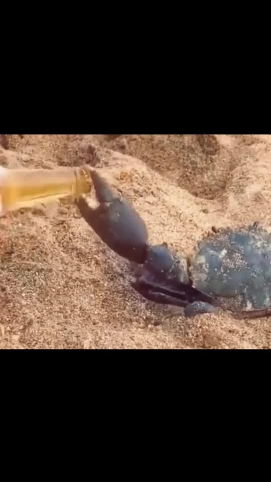 用螃蟹钳子开啤酒,牛逼plus