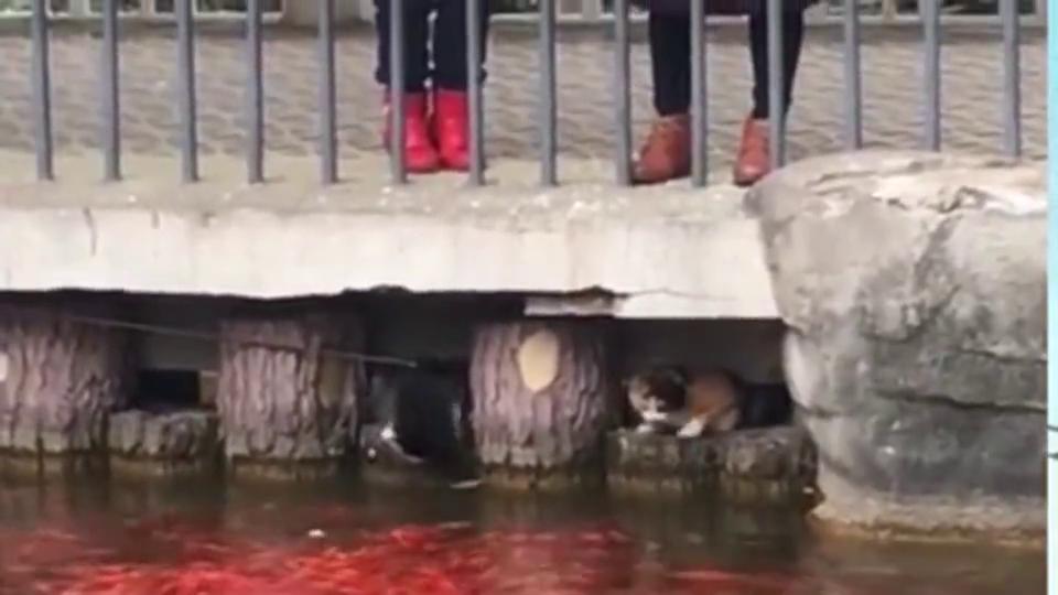 猫:能过的这么幸福,得感谢桥上的人们