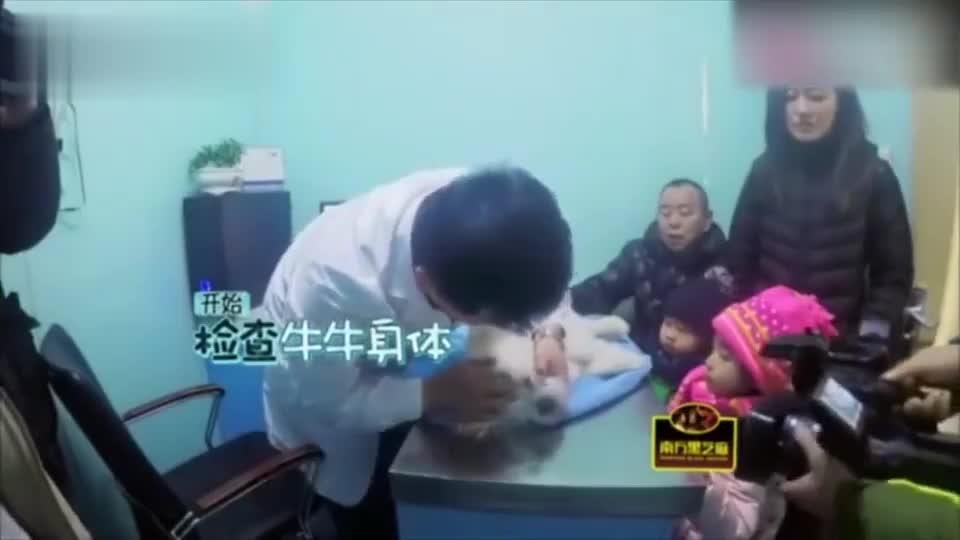 陪伴18年的狗狗被下了病危通知书,突如其来的打击,