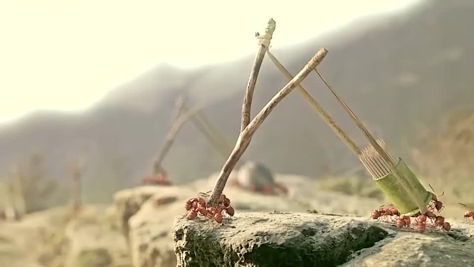 黑蚂蚁与红蚂蚁的军事化作战,什么武器都用上了