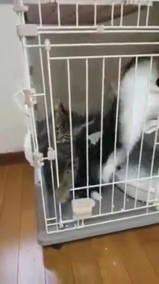猫咪:愚蠢的人类,这是关不住我的